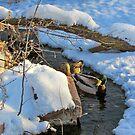 Snowy Swim by Greg Belfrage