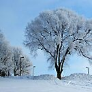Winter Frosting by Greg Belfrage