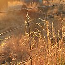 Golden Stalks by Cherie Vivar