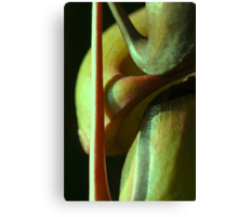 vegetal sensuality Canvas Print