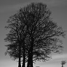 Listen To Your Elders (B&W) by Tim Waters
