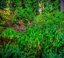 Our Shady Corner by Steve Walser