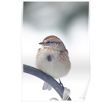 American Tree Sparrow ~ Poster