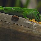 Gecko enjoying lunch by JenniferLouise