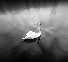SWAN by Stan Owen