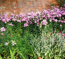Corner of a cottage garden by StephenRB