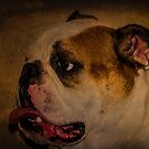 English Bulldog - Bruiser by Euge  Sabo