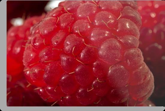 Raspberry Macro by Sandra Foster