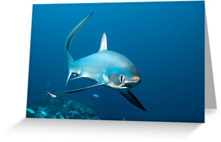 The Whip-Fin by Norbert Probst