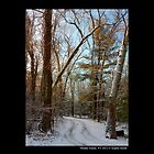 Snow Path In Winter Forest  by © Sophie W. Smith