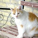 Tabby is this older boys name by Suzan Parrott
