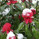 Snow on Waratahs by PenguinSands