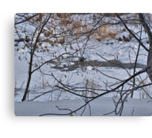 Mink Playing on Open Water Canvas Print