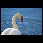Cygnus Olor - Mute Swan by © Sophie W. Smith