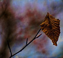 Dormant Simplicity by sundawg7