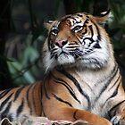 Tiger by PenguinSands