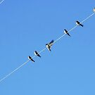114/365 gifts of swallows for a new year! by LouJay