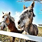 Charming VT Horses by apalmiter