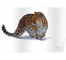 The Amur Leopard in his element  Poster