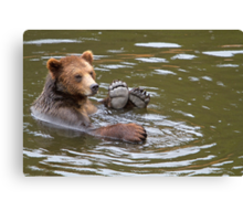 A Brown Bear in Alaska, USA Canvas Print