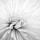 High Key Flower by Erin Fitzgibbon