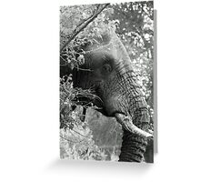 Hiding in the bushes Greeting Card