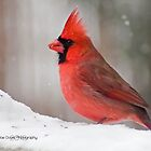 Cardinal In The Snow by JoeDavisPhoto