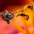 Native Stingless Bee by Andrew Durick
