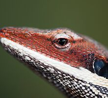 Lizard Macro by Bean Strangeways