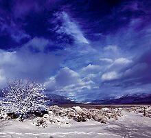 Palomino Valley North winter by SB  Sullivan