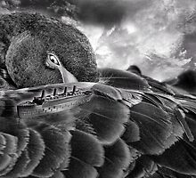 The Royal Mail Ship and Black Swan by GolemAura