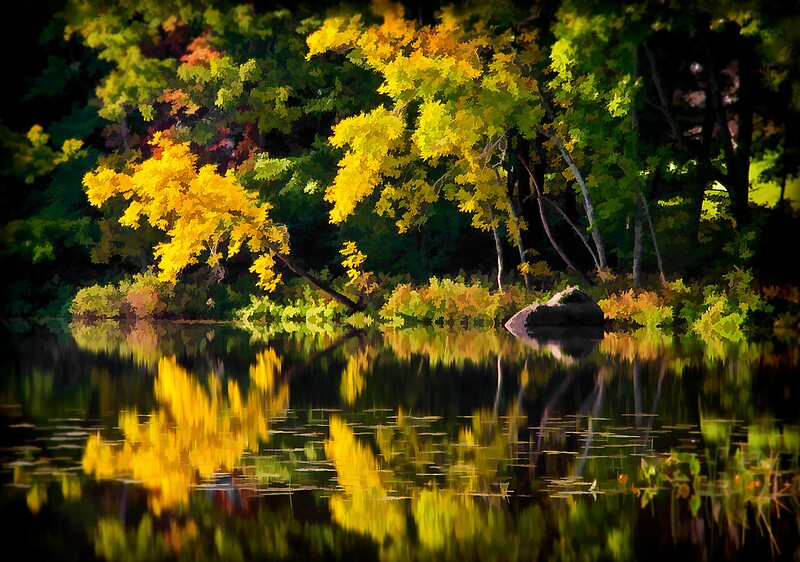 Quot Seven Tree Stream Union Maine Quot By Dave Higgins Redbubble