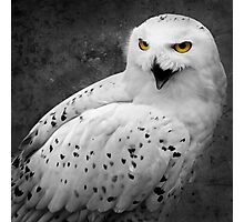Snowy Owl Shrieks Photographic Print