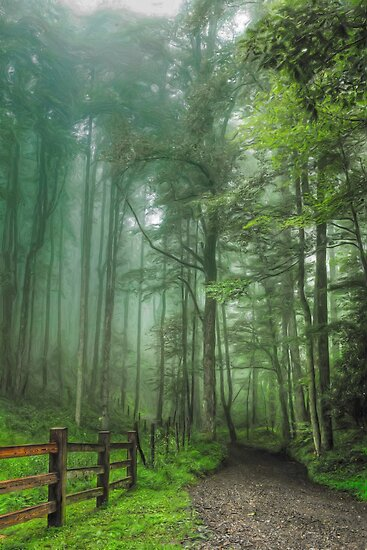 Blue Ridge - Trees in Fog Country Road II by Dan Carmichael