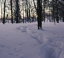 White Woods Walk by Ryan Leatzaw