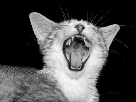 Hear my roar by Heather King