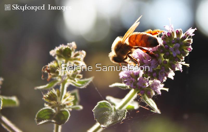 Busy Bee by Selene Samuelsson