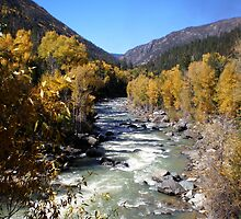 Animas River Rapids Near Durango Colorado by Steve Upton