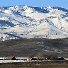 Barns and Farmhouse in Cold Springs,Reno,Nevada USA by Anthony & Nancy  Leake