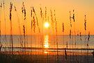 Let The Sun Shine Through by ©Dawne M. Dunton