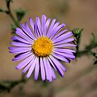 lone desert flower by Anthony & Nancy  Leake