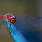 Dragonfly by Marc Maschhoff