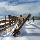 Old Corral in Winter by Dianne Phelps