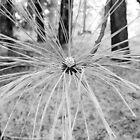Nature Spider by Rosalee Lustig
