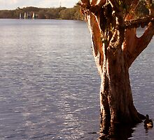 Lake Ainsworth - Lennox Head NSW by OzNatureshots