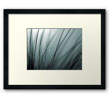 Macro Feather Framed Print