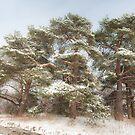 Winter Wonderland by Al Duke