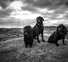 Black Trio by Mark Cooper