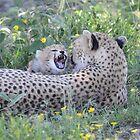 Mother Cheetah and Cub  by JKutchera