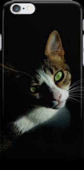 Cat Green Eyes by silvianeto
